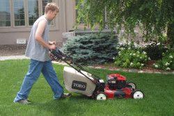 Gardening Services Highgate