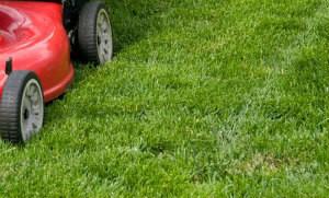 Lawn Mowing Highgate