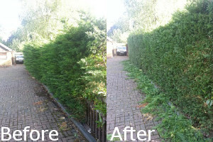 Hedge Trimming Before and After