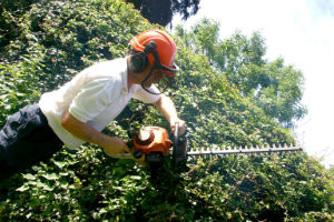 Trimming of the Hedges