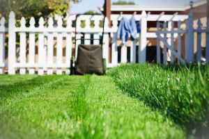 grass-cutting-services-highgate